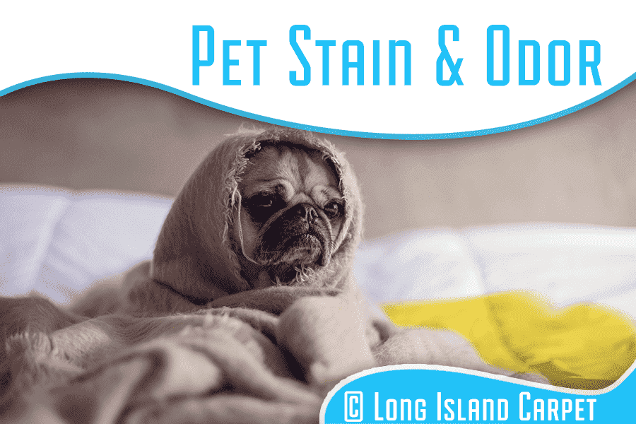 Pet Stain and Pet Odor Cleaning